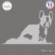Sticker Boston Terrier Sticks-em.fr Couleurs au choix