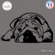 Sticker Bouledogue Anglais Sticks-em.fr Couleurs au choix